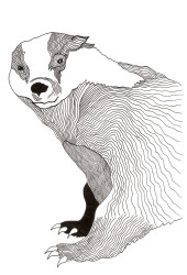 Badger - Pen & Ink